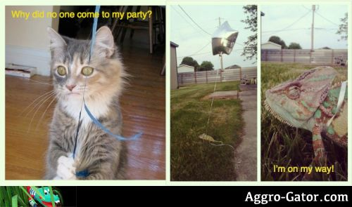 A cat holding a balloon that says why did no one come to my party, and an iguana that says Im on my way.